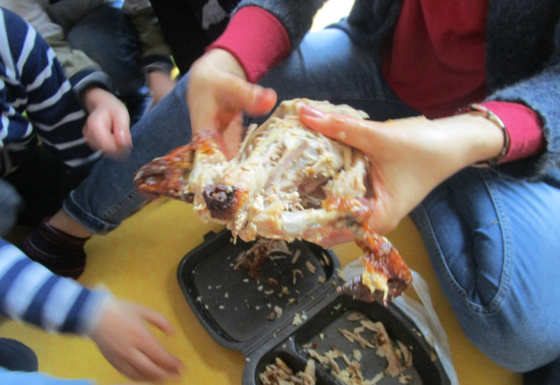Die Anatomie von Tieren im ko-konstruktiven Prozess erforschen