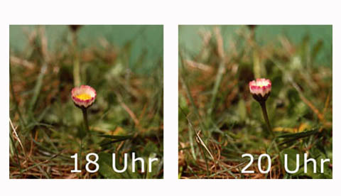 Auch Blumen schlafen!: Gänseblümchenuhr 3