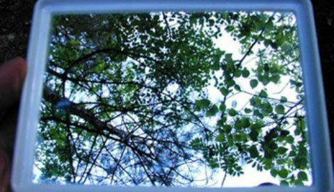 Frosch- und Vogelperspektive: Aus Tiersicht: Spiegelblicke 5