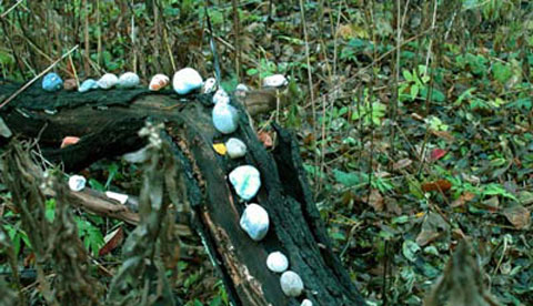 Land-Art im Herbstwald: Kunst aus Natur