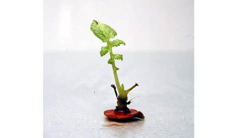 Neues Leben aus Gemüseresten: Grüne Überraschung 1
