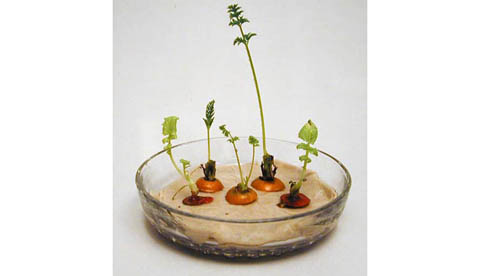 Neues Leben aus Gemüseresten: Grüne Überraschung 2