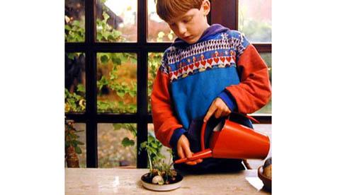 Neues Leben aus Gemüseresten: Grüne Überraschung 3