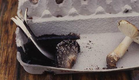 Pilze erforschen: Sporen aus dem Hut