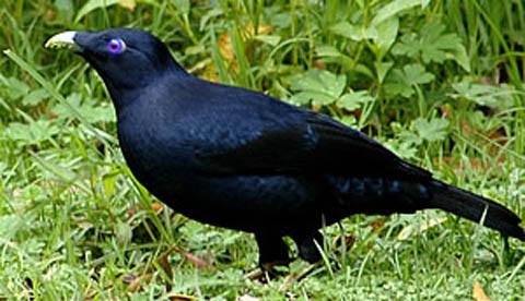 Spiel mit Lieblingsfarbe: Der Vogel mit dem Sammeltick 1