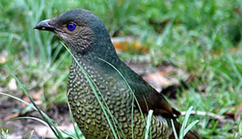 Spiel mit Lieblingsfarbe: Der Vogel mit dem Sammeltick 2