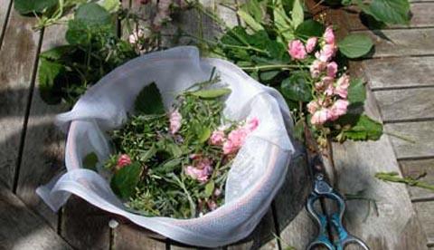 Werkeln mit Kräutern und Blüten: Erfrischungsbad und Eistee 4