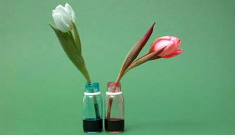 Zaubern mit Tinte: Blaue Tulpen 2