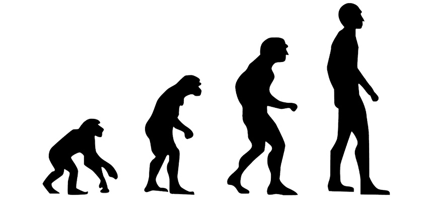 Die Evolution der Hominiden