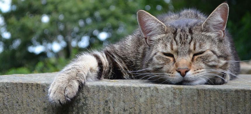 Müde und schlapp
