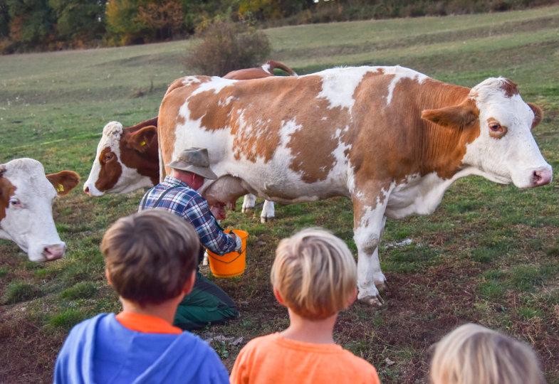 Auf dem Bauernhof erfahren die Kinder unmittelbar, dass Milch nicht aus der Tüte kommt