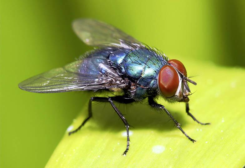 Ideenkiste: Fliegen