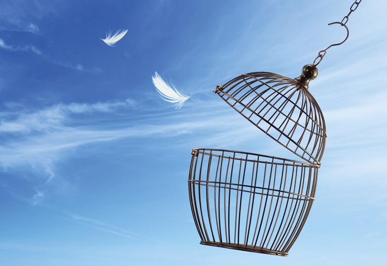 Die Taube: Symbol für Heiliges