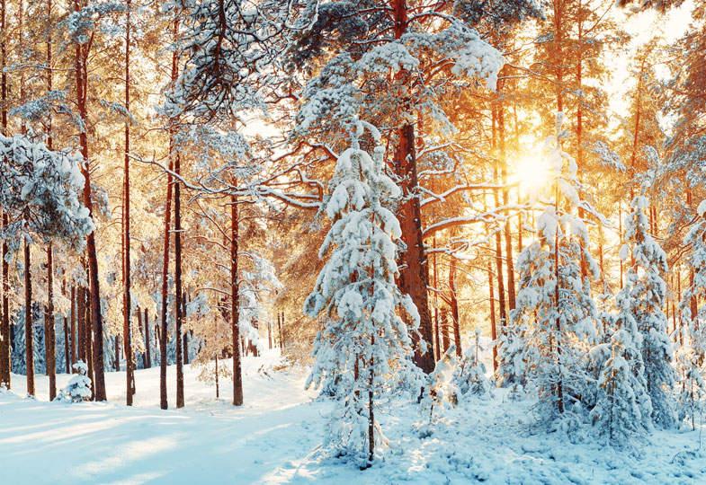 In einer Schneelandschaft