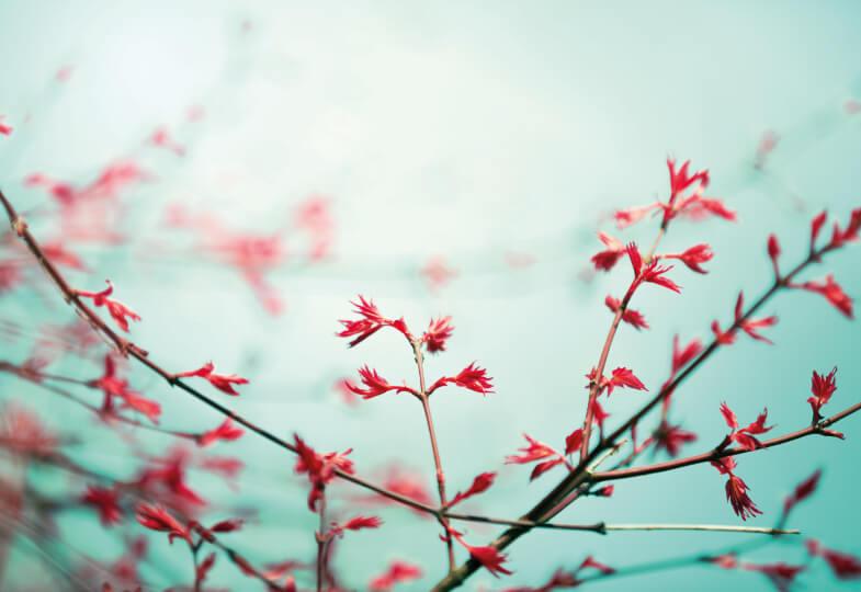 Blühender Zweig