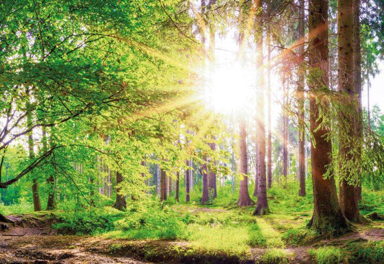 Spazierengehen im Wald