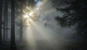 Sonne durchringt Nebel im Wald