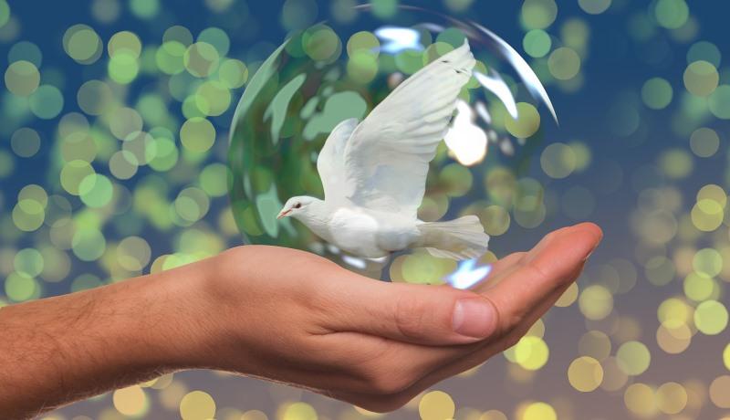 Weiße Friedenstaube sitzt auf einer Hand