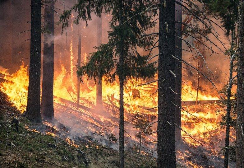 Wo bleibt Gott, wenn die Wälder brennen