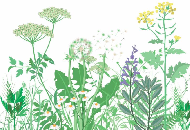 10 Tipps für den Naturgarten