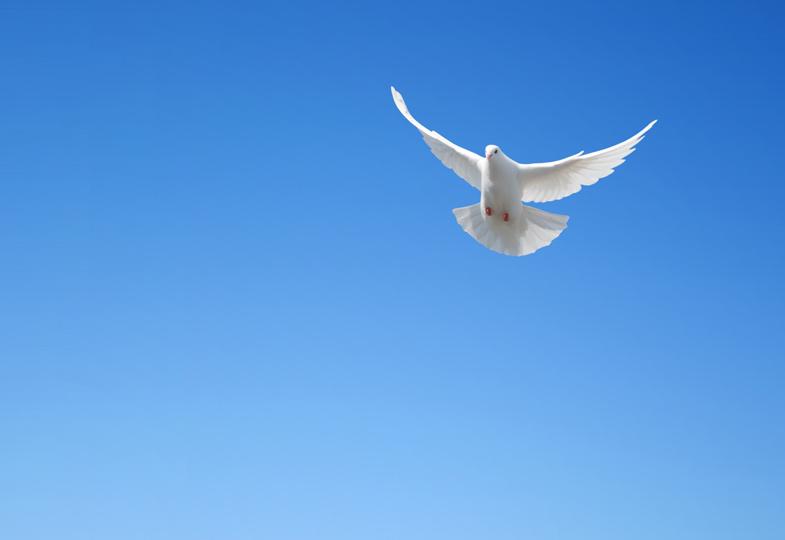 Alle Menschen brauchen Frieden