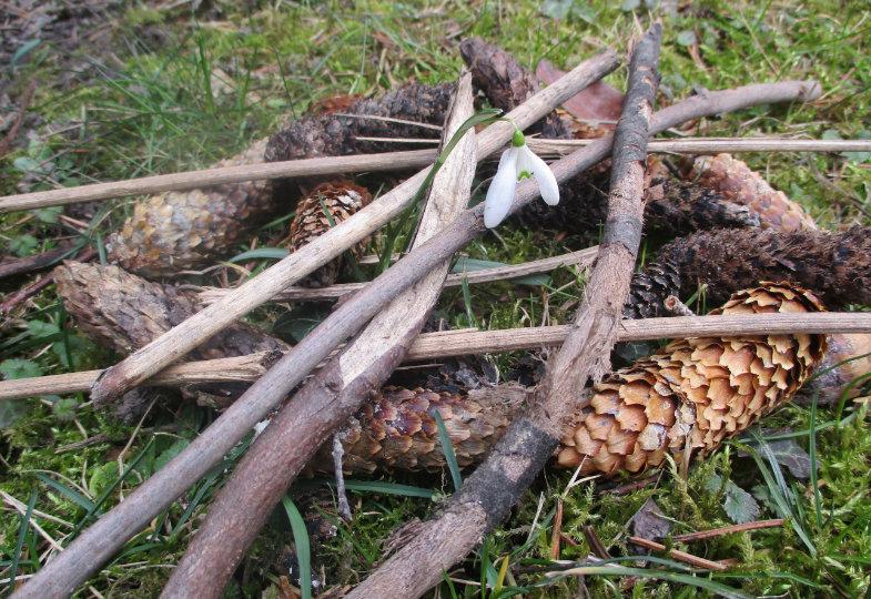 Ein Schutzkreis für Schneeglöckchen