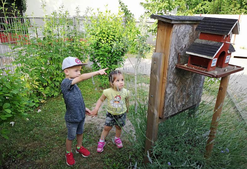 Insektenretter gesucht! Was Kitas gegen das Insektensterben tun können – ein Interview