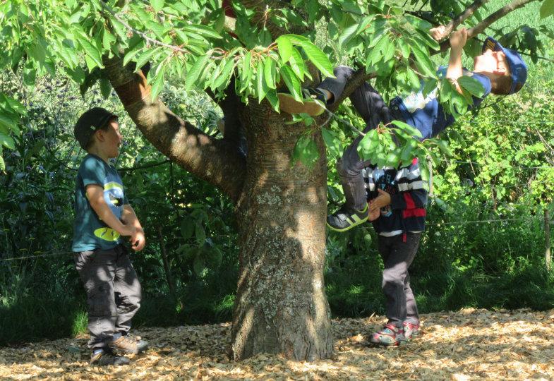 Kletterbaum und Weidentipis: Ein naturnaher Garten als Lern- und Erfahrungsraum