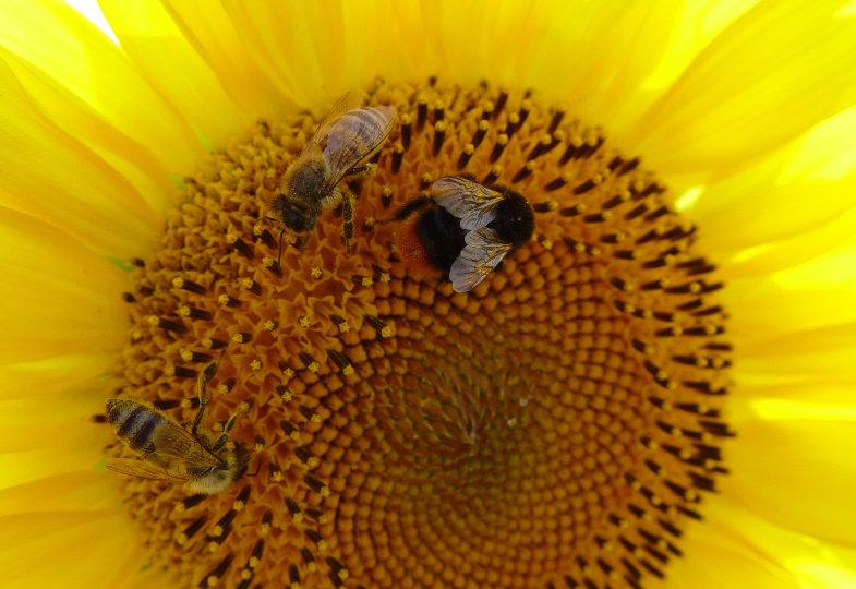 Stück für Stück zum Bienenglück. Das Außengelände einer Kita wird zum Lebensraum für Insekten