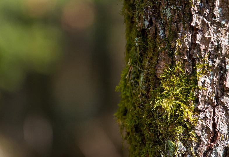 Baum-Steckbrief und Wurmkiste