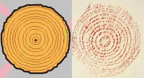 Baumringe und Blättergerippe: Rubbelbilder aus dem Wald