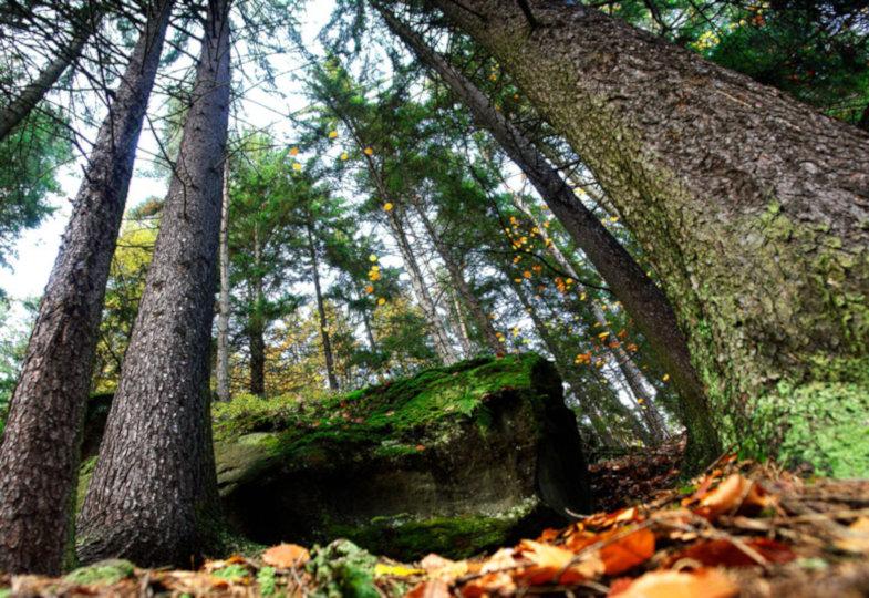 Der Waldkindergarten: Die Begegnung mit der Natur fördern