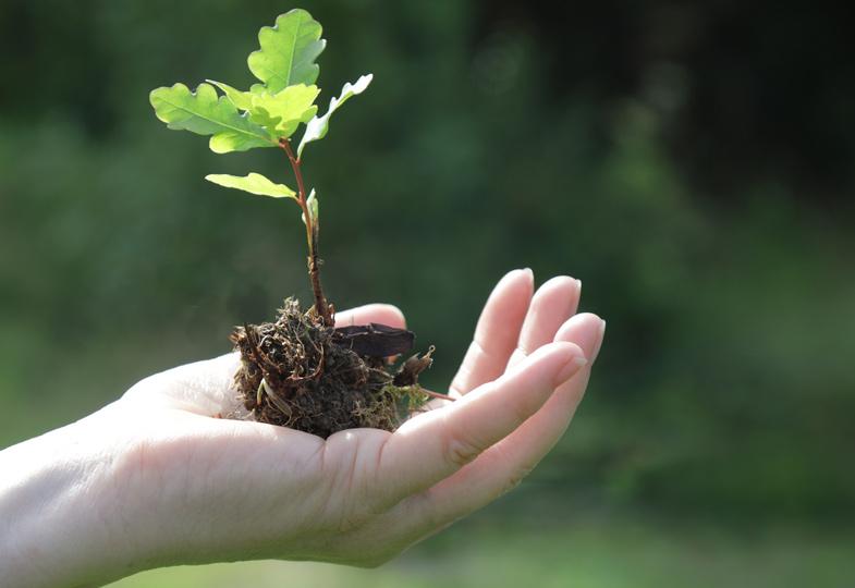 Die Erde für unsere Kinder bewahren