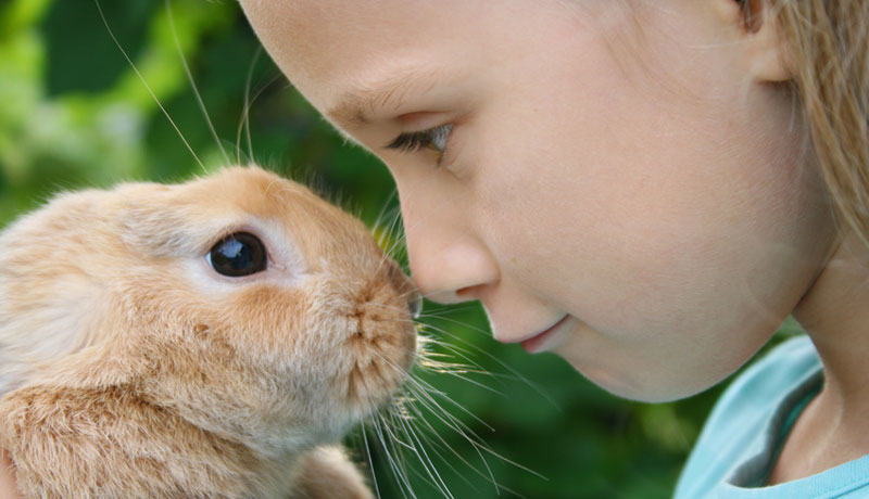 Ein Tier für die Familie: Was vor dem Haustierkauf zu beachten ist