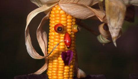 Figuren aus Maiskolben: Mais-Zausel