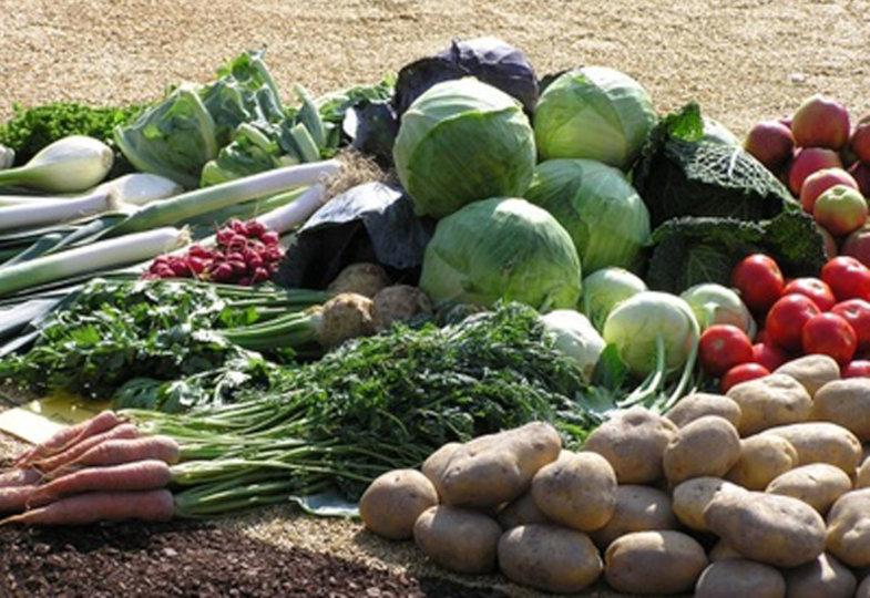 Gesund durch den Winter: Obst aus der Region