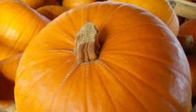 Mit Kürbis und Kartoffel durch die goldene Jahreszeit: So gut schmeckt der Herbst!