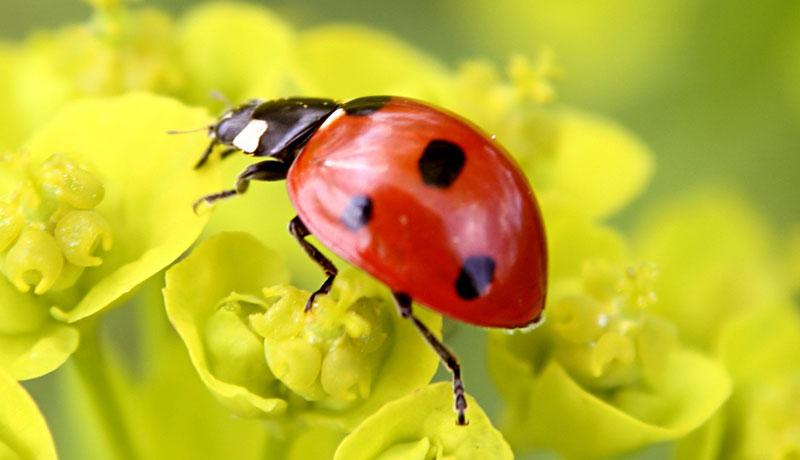 Ein Fest zu Ehren der kleinen Glücksbringer: Wir begrüßen den ersten Marienkäfer