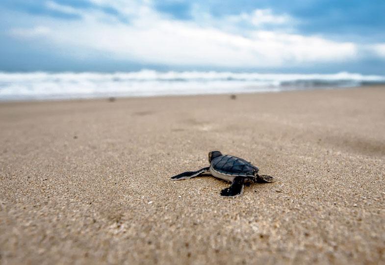 Mit den Schildkröten paddeln