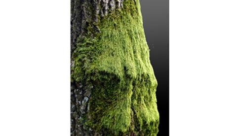 Mit Kindern die Natur entdecken: Baum-Steckbrief und Wurmkiste