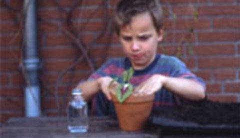 Pflanzen beim Wachsen zusehen: Wurzelwunder