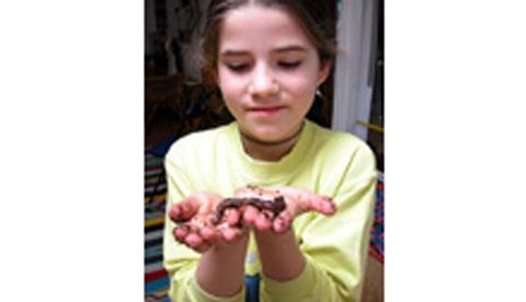 Regenwürmern bei der Arbeit zusehen: Nützliche Erdarbeiter