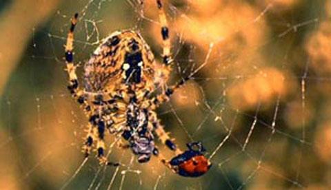 spinnen-netze-beobachten-am-seidenen-faden