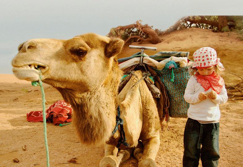 Tee trinken mit dem Kamel