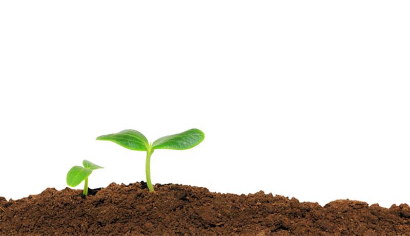 Wann wächst was? Aussaattermine für Gemüse und Blumen