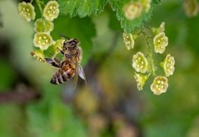 Schutz der Artenvielfalt: Nisthilfen für Wildbienen im eigenen Garten bauen
