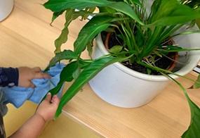Pflanzenpflege und Höflichkeitsformen