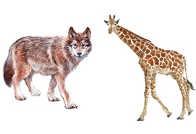 Von Giraffen und Wölfen - Die Gewaltfreie Kommunikation