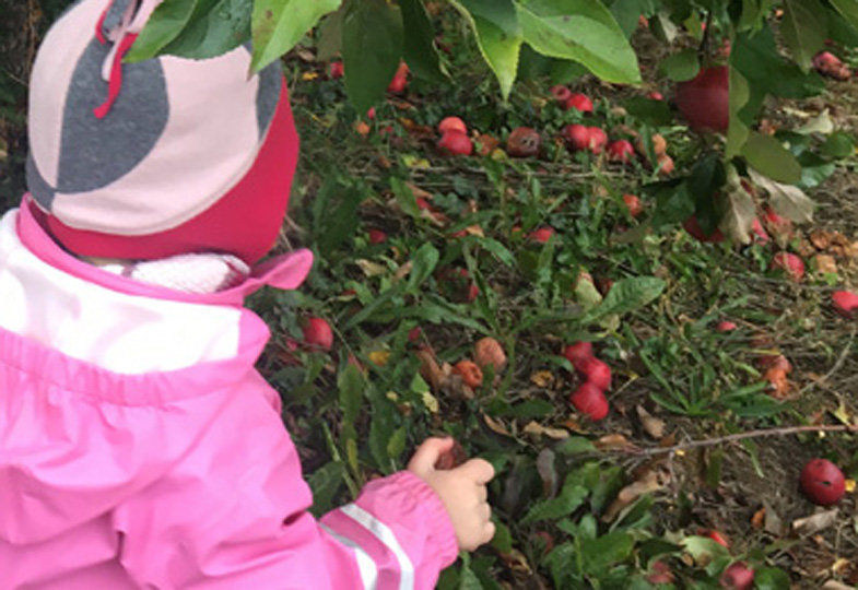 Woher kommt der Apfel in meiner Dose